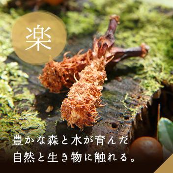 豊かな森と水が育んだ自然と生き物に触れる。